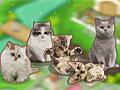 Деревня кошки
